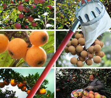 Meyvədərən